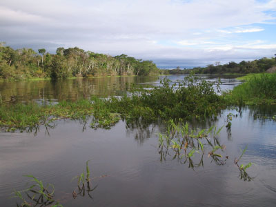 Floodplain channel in the Amazon